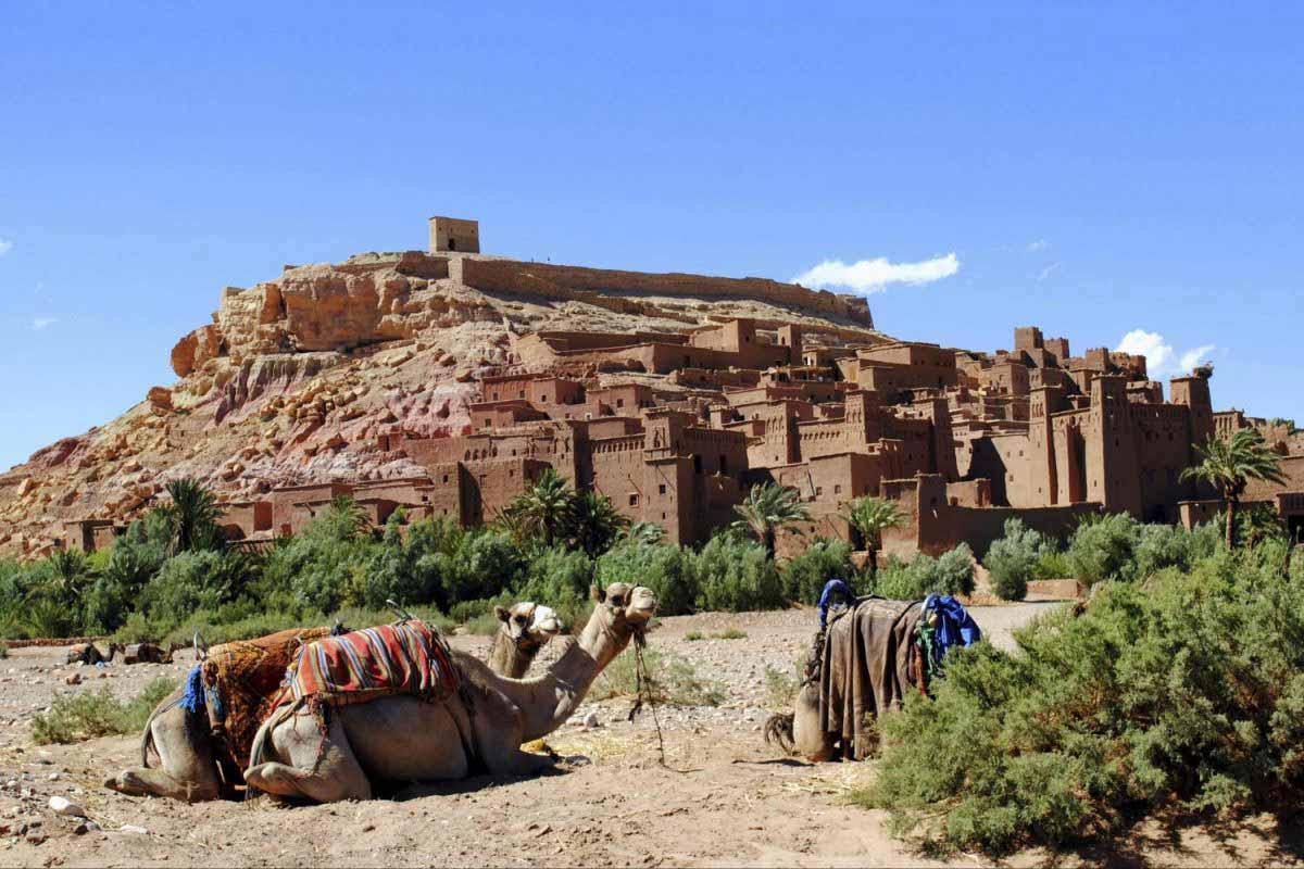 Balade à dos de dromadaire à Ouarzazate