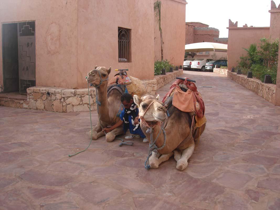 Balade à dos de dromadaire - activité Hôtel Ksar Ighnda Maroc