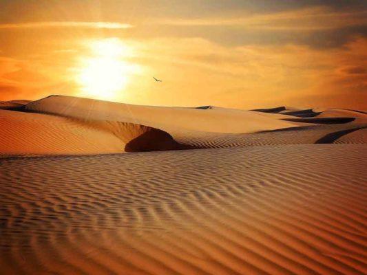 Activité désert Sahara