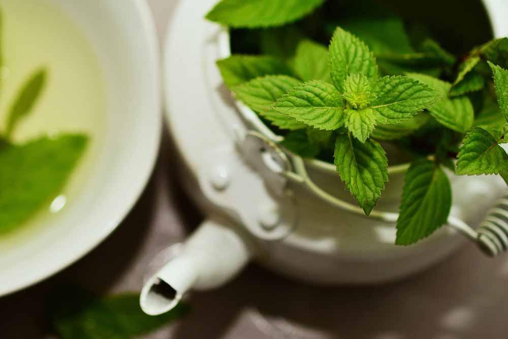 thé à la menthe du Maroc