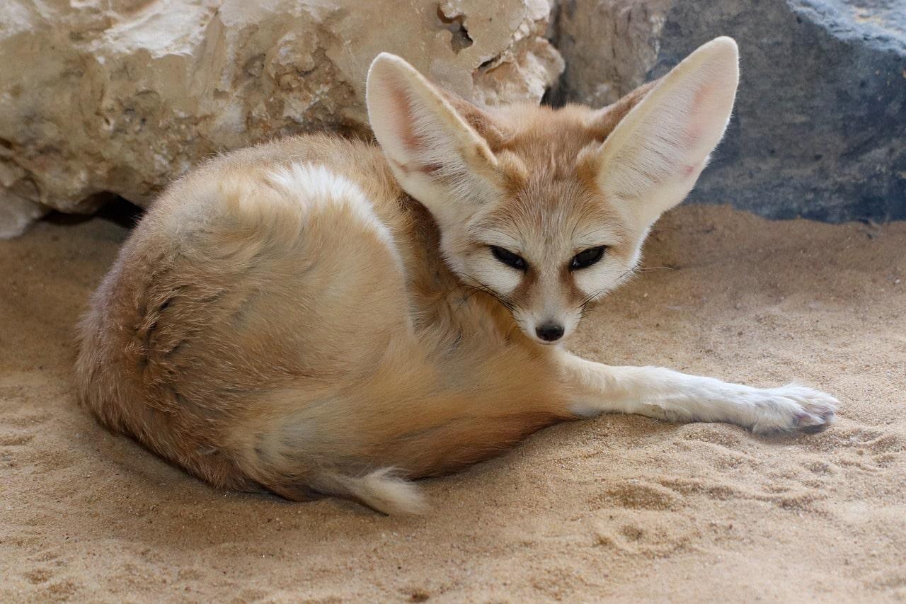 faune au maroc